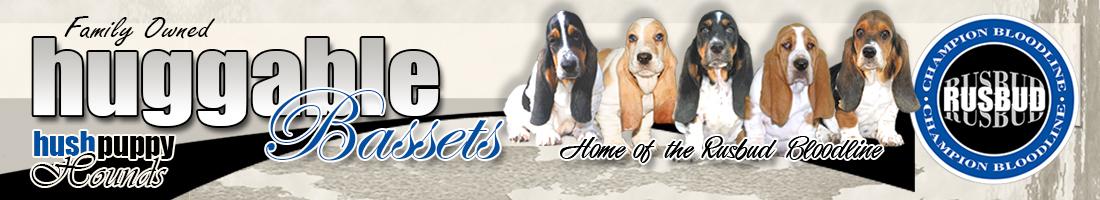 Champion Bloodline basset hound puppies for sale and basset